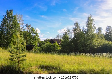 Summer landscape in countryside. Field with bushes and pine tree.