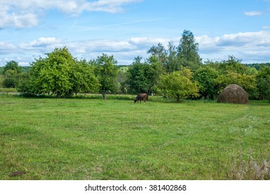 summer landscape with cow