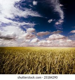 summer landscape with dark blue sky