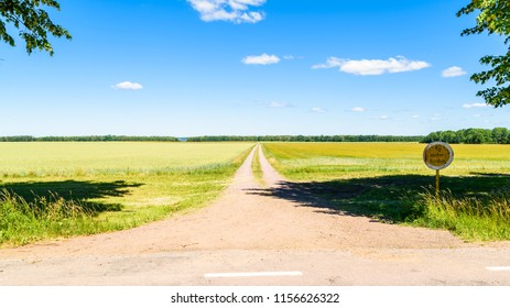 Summer landscape with a dirt road leading through farmland towards a forest at the horizon. Location near lake Takern in Sweden.
