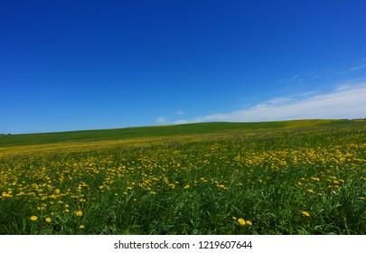 Summer landscape during sunny day
