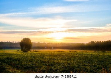 Summer landscape - field, grass, house, tree, forest, fog in the morning