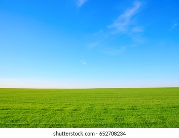 Summer landscape - field with green grass against a blue sky with clouds