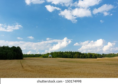 Summer landscape with field and grove