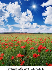 Summer Landscape with a field of red poppies