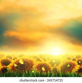 Summer Landscape With Field, Sky, Sun, Sunset, Grass, Sunflowers And Butterflies