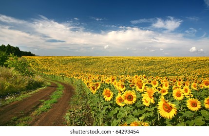Summer landscape with a field of sunflowers, a dirt road and a tree