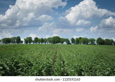 Summer landscape with field, trees and beutiful clowds.