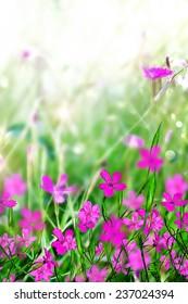 Summer landscape. Flower field. Wallpaper.