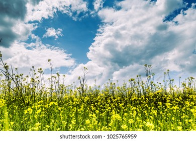 Summer landscape - flowering meadows and fields against a background of clouds