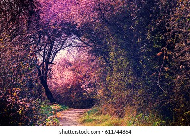 Summer landscape with footpath in magic garden. Nature landscape background