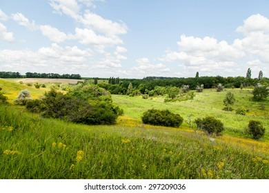 Summer landscape in the forest