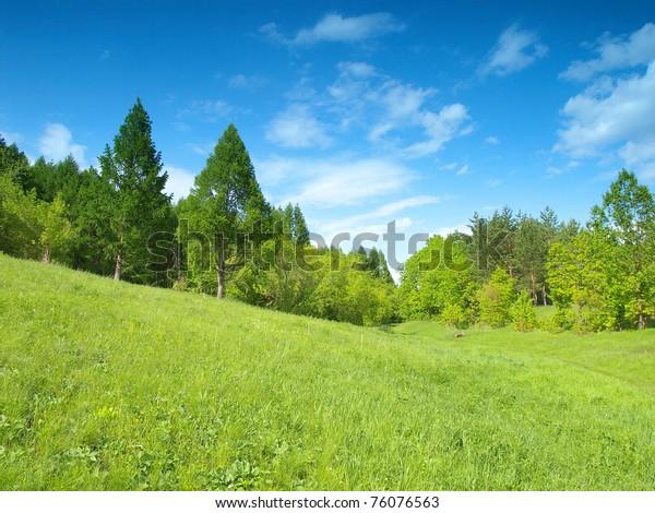 summer-landscape-forest-600w-76076563.jp