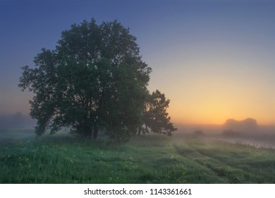 Summer landscape of grassy meadow with trees in the early morning at sunrise. Belarus nature on clear morning at dawn. Grass and tree against sunlight on horizon. Naturel rural scene