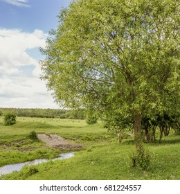 Summer landscape with green colors in the vicinity of Pinsk, Belarus.