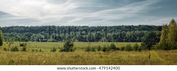 summer landscape of green fields on the background of forest and sky