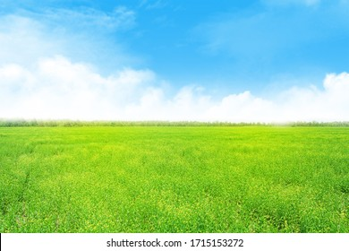 Summer landscape with green grass field and blue sky