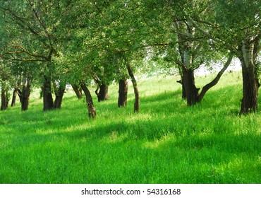 Summer landscape with green grass and trees