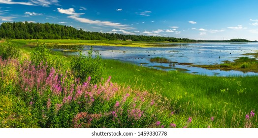 Summer landscape with green medow and pond, forest and village on horizon near Sangis in Kalix Municipality, Norrbotten, Sweden. Swedish landscape in summertime.