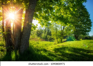 Summer landscape of green nature with bright sun and clear blue sky in morning. Countryside view on scenery summer nature in sunny day. Green trees on river bank vibrant color. Natural rural scene.