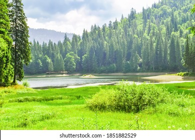 Summer landscape with green valley, pine forest, lake and mountains at distance, sunny light day. Spring fields, river and evergreen fir woodland. Beauty tranquil scene in Carpathians, Ukraine