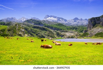 Summer  landscape with lake and pasture. Lake Ercina.  Asturias, Spain