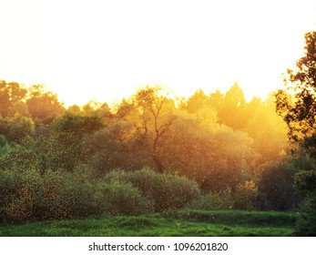 Summer. Landscape meadow and forest at sunset. Transparent columns of midges over tall grass in front of the sun. A swarm of midges. Nature in the rural