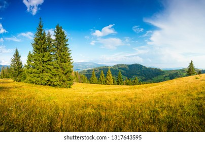 Summer landscape. Meadow on mountain hills in the morning. Nature scene with clear blue sky.
