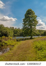 A Summer landscape with a meadow trail around the lake in this park in Monmouth County New Jersey.