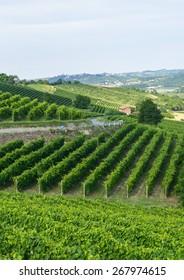Summer landscape in Monferrato (Piedmont, Italy), with vineyards