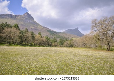 Summer landscape of a mountain