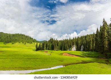 Summer landscape in the mountains, with beautiful green pasture and fir tree forests