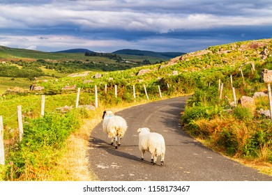 Summer landscape of mountains, hills and meadows in popular and picturesque Ring of Kerry, Ireland