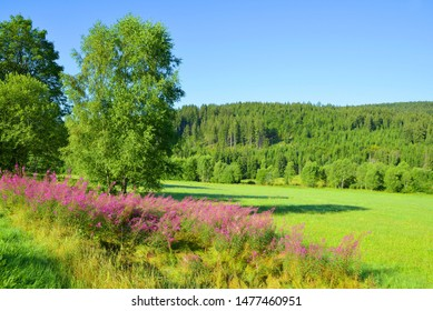 Summer landscape in the National park Sumava, Czech Republic.