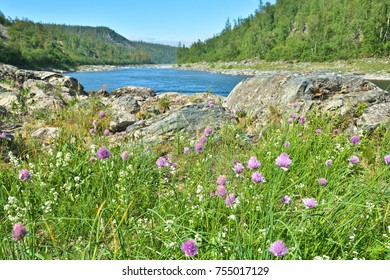 Summer landscape, northern river. Reserves in the Polar Urals in Russia.