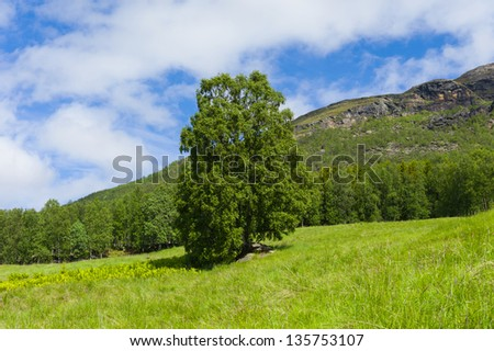 Summer landscape in Norway