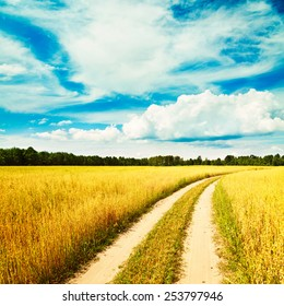 Summer Landscape with Oat Field and Country Road on the Background of Beautiful Sky. Agriculture Concept. Toned Photo. Copy Space.