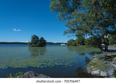 Summer landscape on lake Malaren near Sigtuna, Sweden. The water surface is covered with water lilies. Bright blue sky with little white clouds.