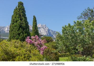 Summer landscape in the park with a view of the top of the mountain. Crimea, the view from the park Vorontsov in Alupka on top of Ai-Petri