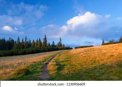 Summer landscape with a path in the mountains