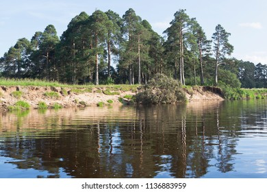 Summer landscape of the Pesterovskaya grove with the fallen pine in the river Vaga. Vaga River in Verkhovazhsky District, Vologda Region, Russia