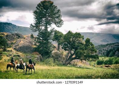 Summer landscape of Piedra Pintada Neuquen. - Shutterstock ID 1270391149
