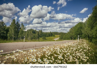 Summer landscape with road and daisies meadow.