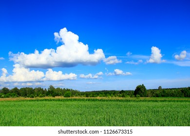 Summer landscape with rural field and white clouds on blue sky. Big white cloud above green rural field. Rural panorama. Rural landscape. Landscape of field and beautiful clouds in countryside