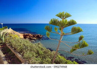 Summer landscape with the sea and the coast