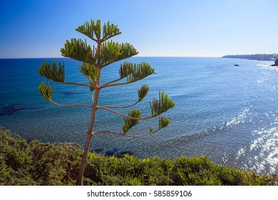 Summer landscape with the sea and the coast Spain