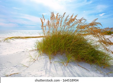 Summer landscape with Sea oats and grass dunes on a beautiful Florida beach in late afternoon