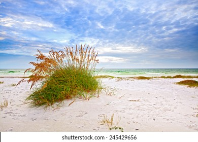 Summer landscape with Sea oats and grass dunes on a beautiful fine sandy Florida beach in late afternoon with blue sky