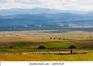 Summer landscape with shepherd