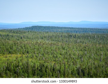 Summer landscape with spruce trees in the wilderness of Riisitunturi national park, a mountain in Lapland in Finland. Young trres on the foreground.